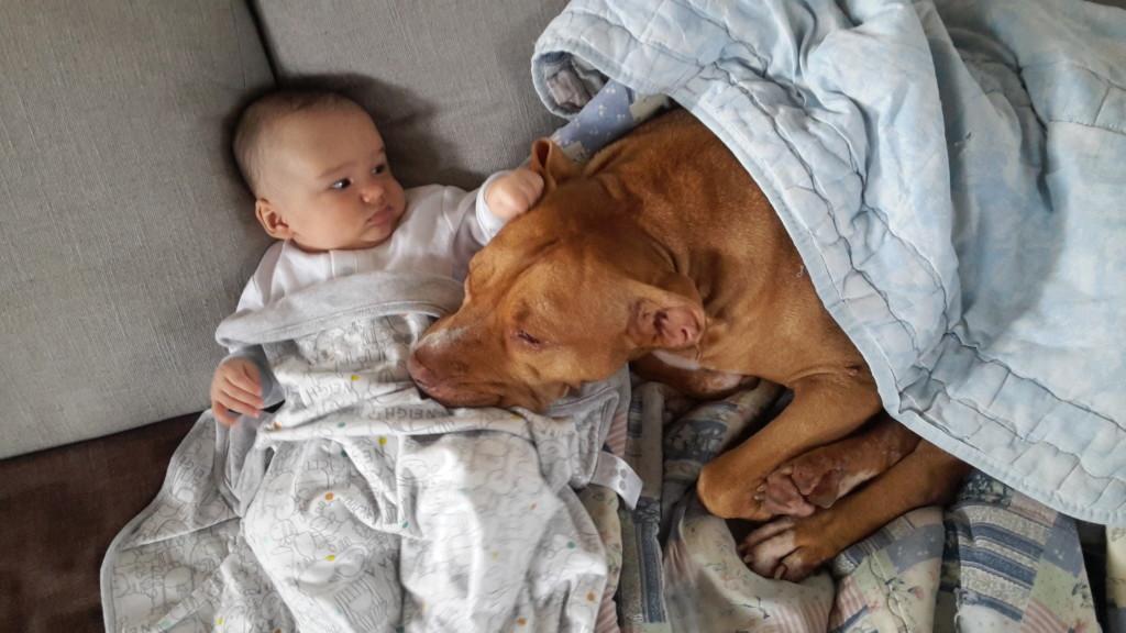 cane e bambino divano