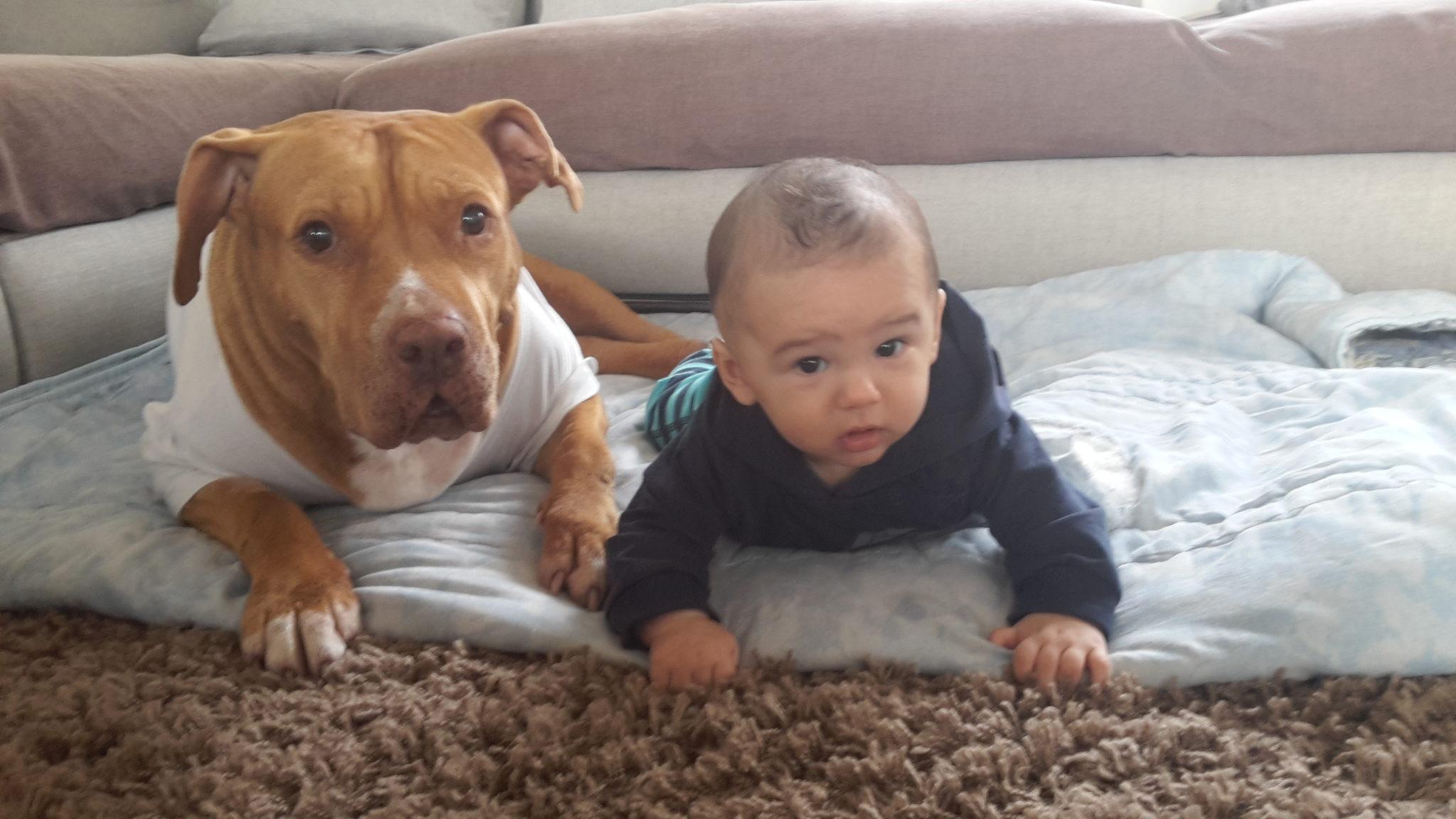 cane e bambino a gattoni