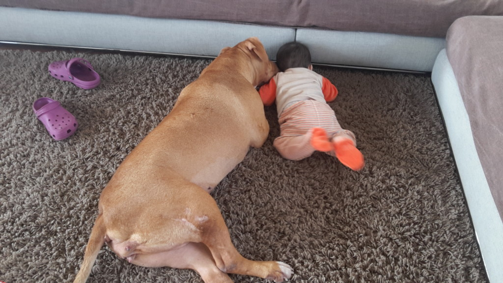 Gioco tra cane e bambino