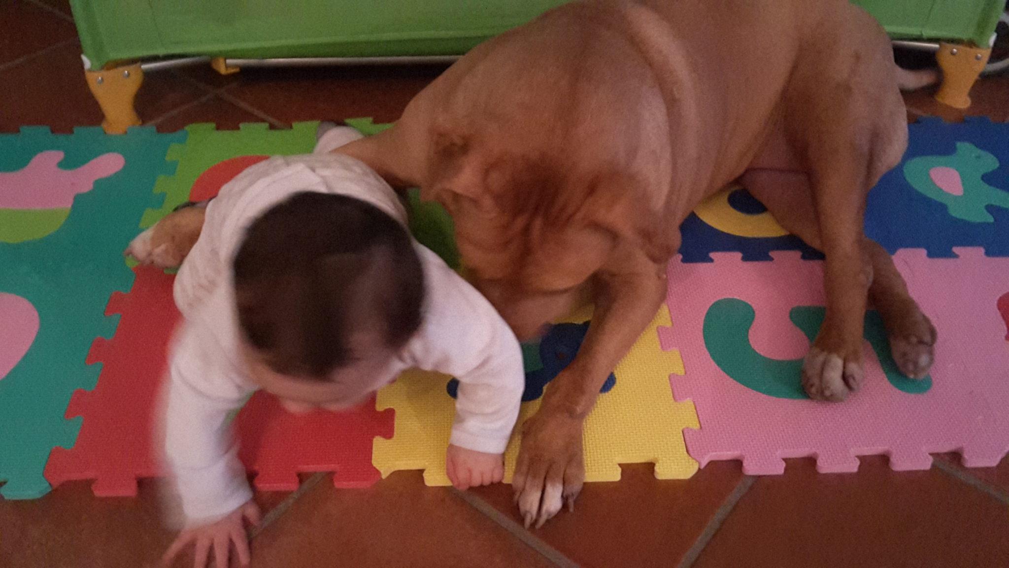 Cane e bambino giocano