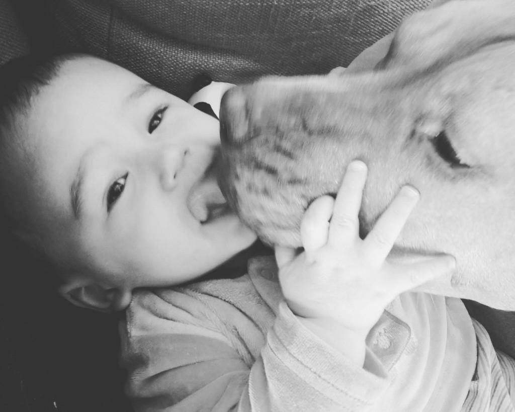 cane e bambino si baciano