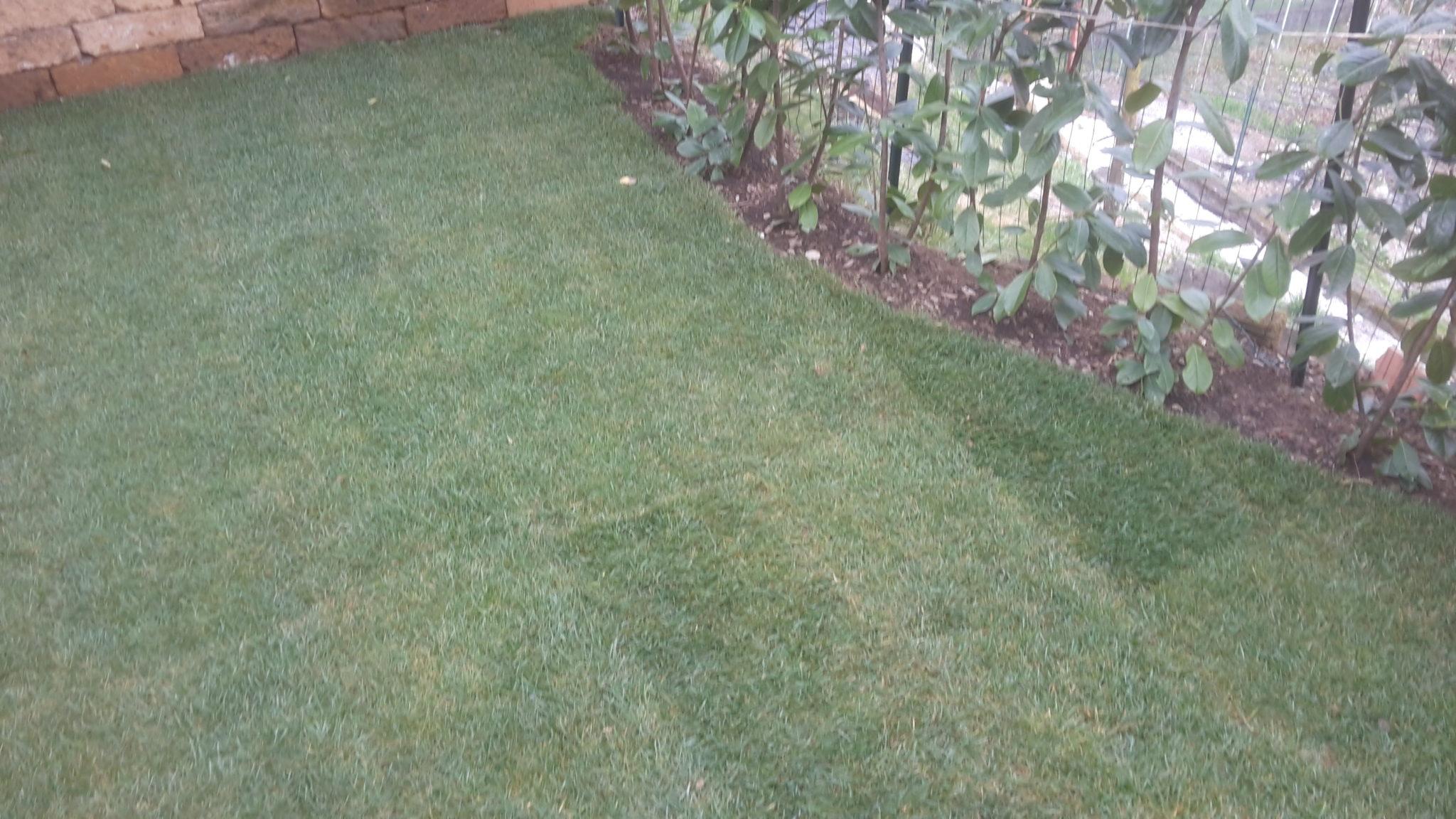 Il tappeto erboso a rotoli quanto costa for Tappeto erboso a rotoli