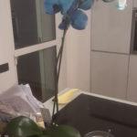 Cosa fare dell'orchidea dopo la fioritura