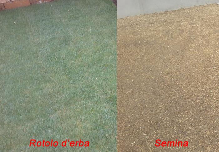 confronto rotolo d'erba rispetto alla semina