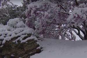 giardino a gennaio - imbiancata di neve