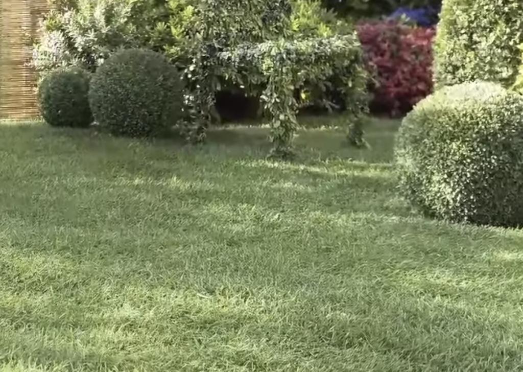 giardino a giugno - manto erboso