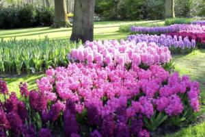 giardino a maggio