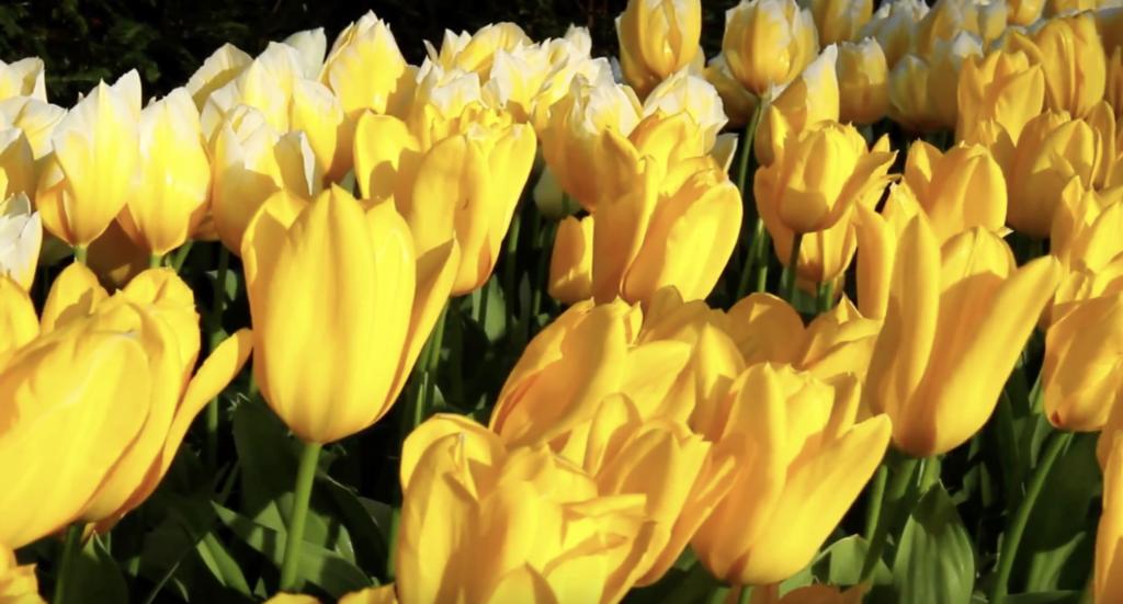 giardino a maggio - fioritura