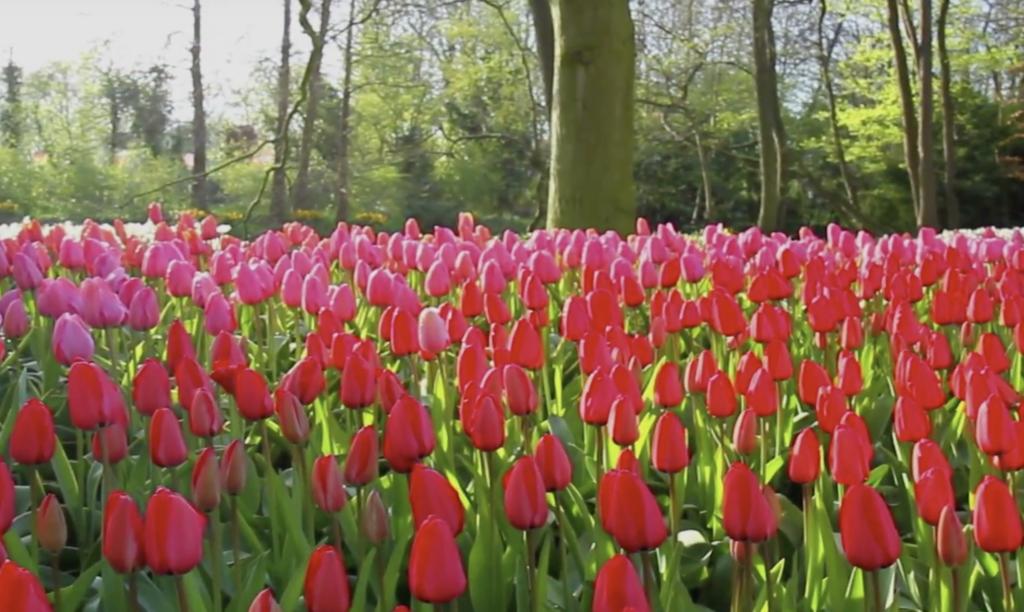 giardino a maggio - grande fioritura