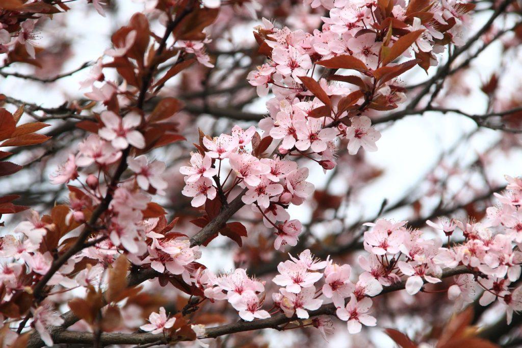 giardino a marzo - la fioritura.