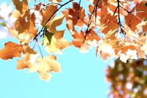 giardino a novembre - le foglie