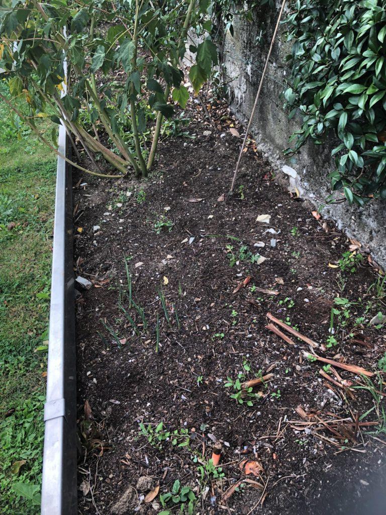 aiuola a aprile - pulizia dalle erbacce
