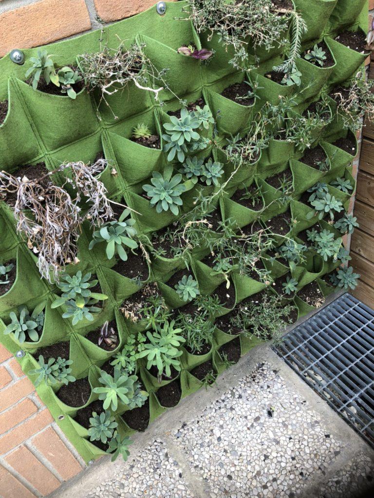 piante grasse - parete